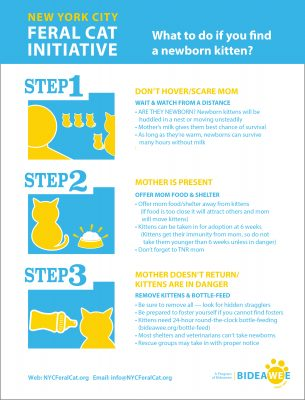 Infographic: What to do if you find a newborn kitten?