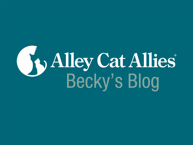 Alley Cat Allies - Becky's Blog