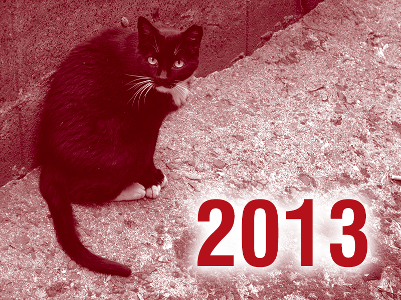 Community Cats & TNR in the News - 2013