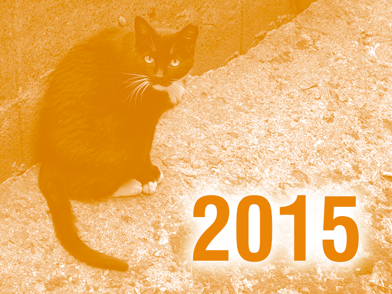 Community Cats & TNR in the News - 2015