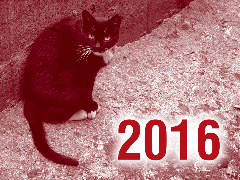 Community Cats & TNR in the News - 2016