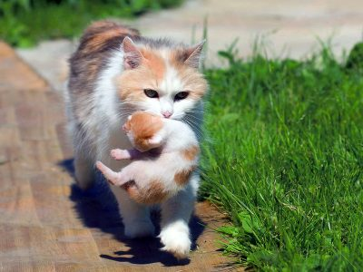 The mother cat offers her newborn kittens their best chance for survival, so wait and watch as long as you safely can for her to return before removing them.