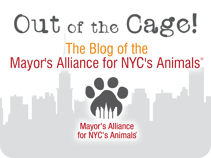 Out of the Cage! The Blog of the Mayor's Alliance for NYC's Animals