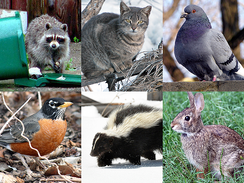 Cats & Wildlife: Can't We All Get Along?
