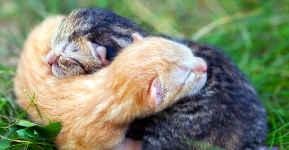 What to Do (and NOT Do) If You Find Newborn Kittens