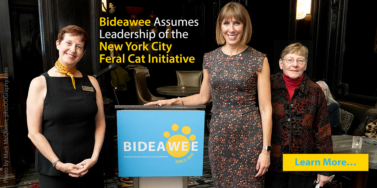 Bideawee Assumes Leadership of New York City Feral Cat Initiative