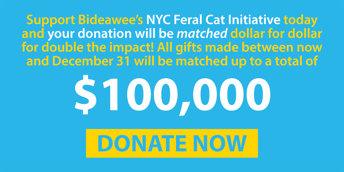 Donations to the NYC Feral Cat Initiative will be matched through December 31!
