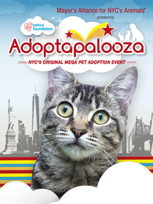 Cats & Kittens for Adoption from Adoptapalooza Groups