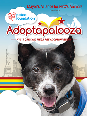 Dogs & Pupplies for Adoption from Adoptapalooza Groups