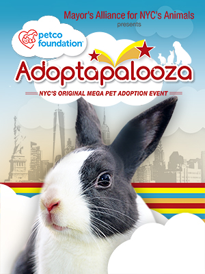 Rabbits for Adoption from Adoptapalooza Groups