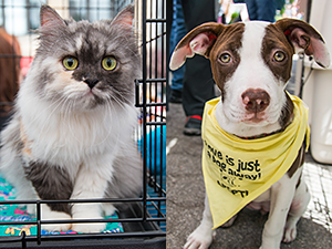 Hundreds of shelter pets like these found new homes at Adoptapalooza events in 2016. (Photos by Joe Galka and Bille Axell)