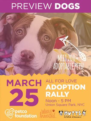 Dogs & Pupplies for Adoption from All for Love Adoption Rally Groups