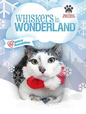 Cats & Kittens for Adoption from Whiskers in Wonderland Groups