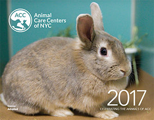 Animal Care Centers of NYC (ACC): 2017 Calendar