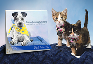 North Shore Animal League America: Rescue Puppies & Kittens 2018 Calendar