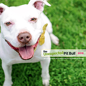 The Unexpected Pit Bull: 2018 Calendar