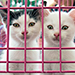 Adoptapalooza Union Square Showcases Pets from NYC Area, Florida, Texas