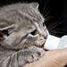 Workshop: Bottle-Feeding & Care of Orphaned Kittens - October 7, 2014
