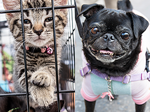 Our strategic programs have saved the lives of hundreds of thousands of NYC's shelter pets and community cats since 2003. (Photos by Mark McQueen and Joe Galka)