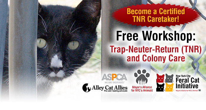 Become a Certified TNR Caretaker!