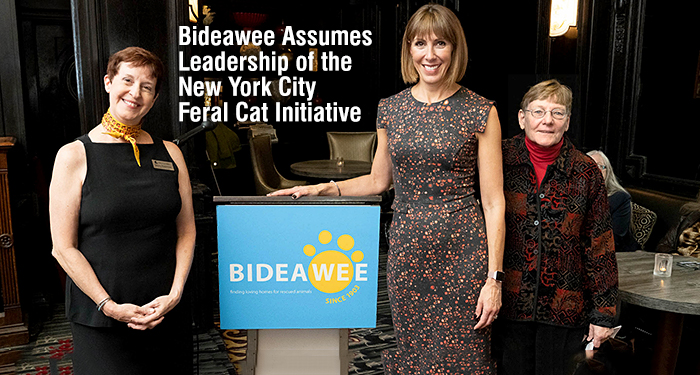 Bideawee Assumes Leadership of the New York City Feral Cat Initiative