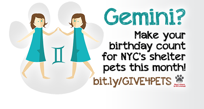 Gemini? Make your birthday count for NYC's shelter pets this month!