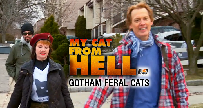 My Cat From Hell: Gotham Feral Cats