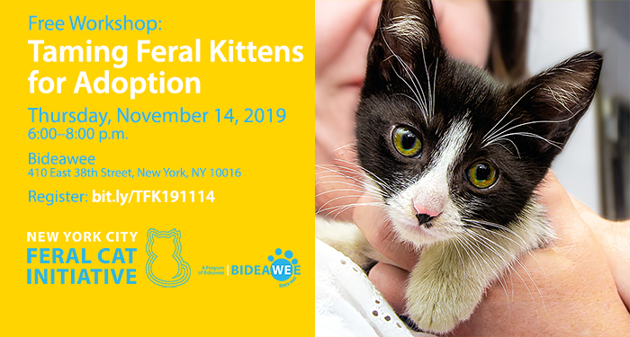 Taming Feral Kittens for Adoption