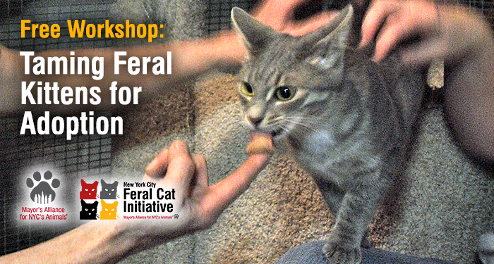 Free Workshop: Bottle-Feeding & Care of Orphaned Kittens