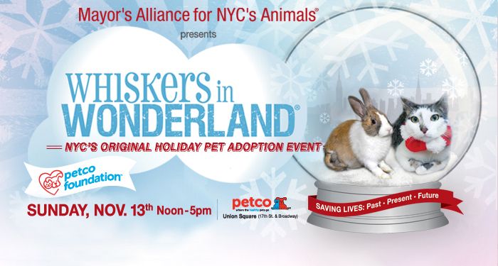 Whiskers in Wonderland - November 13, 2016